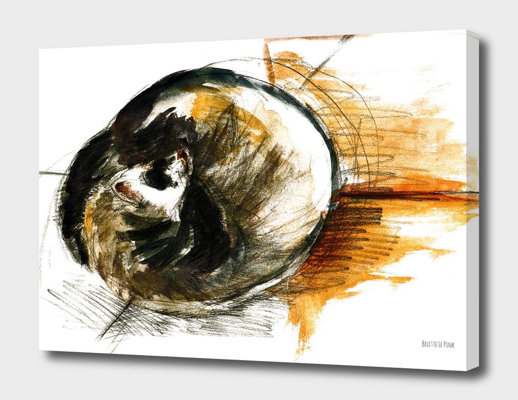 Little furet - Sleepy ferret