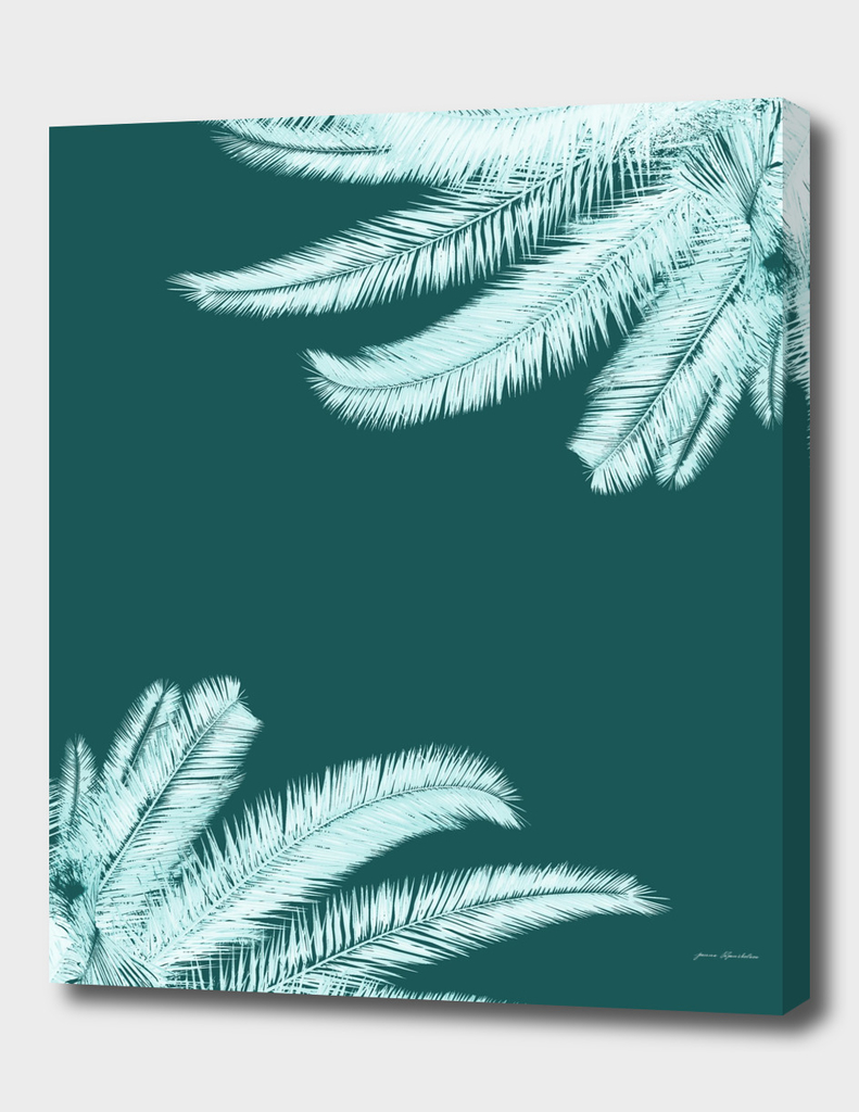 Palm leaves silhouettes on teal
