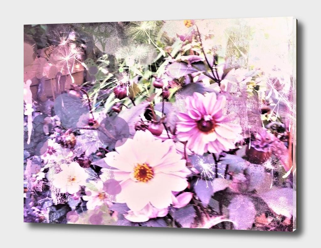 Soft Cosmos Garden
