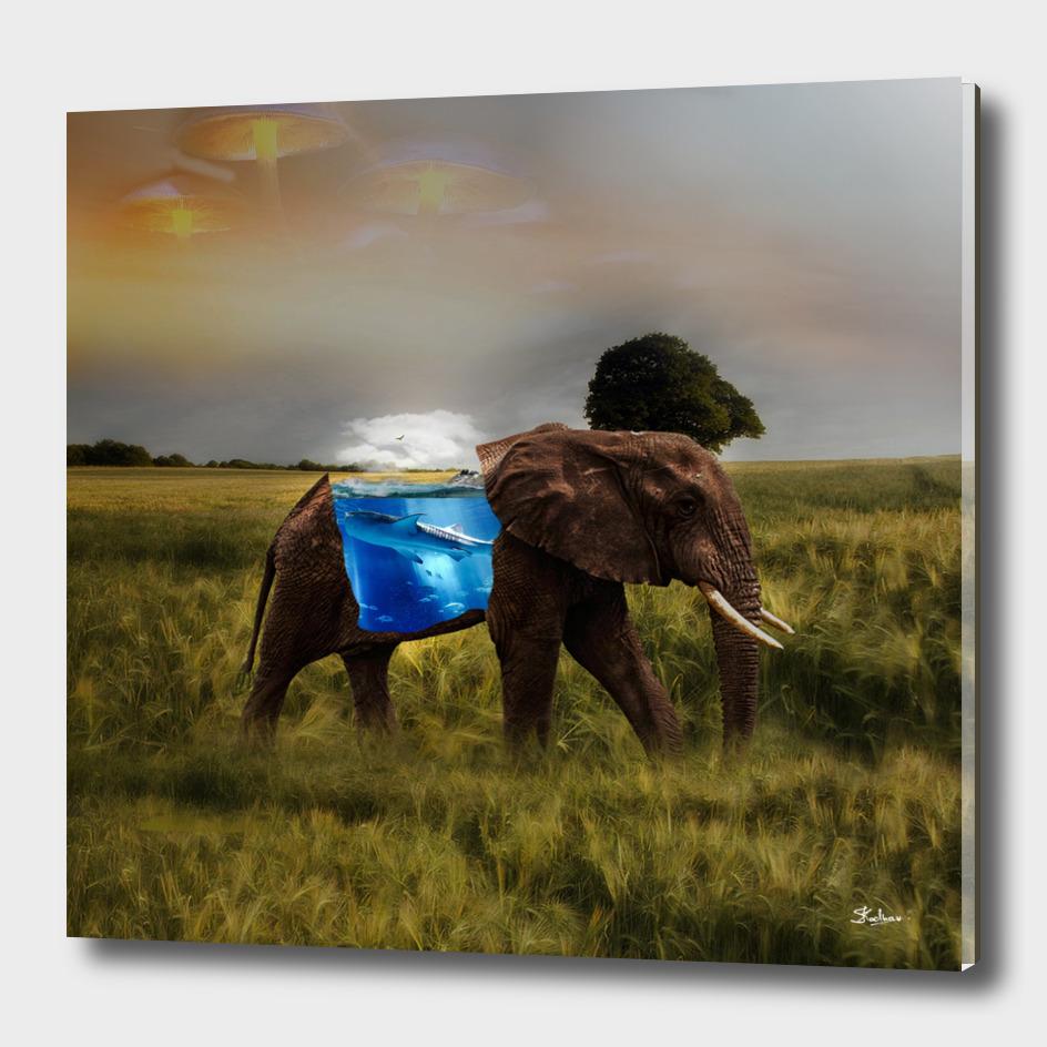 Elephant With A Aquarium   Visual Art