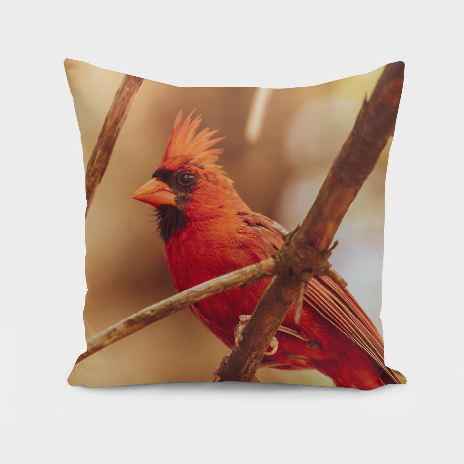Northern Red Cardinal