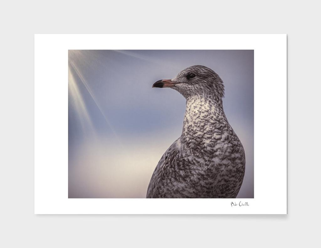 Johnathan Livingston Seagull