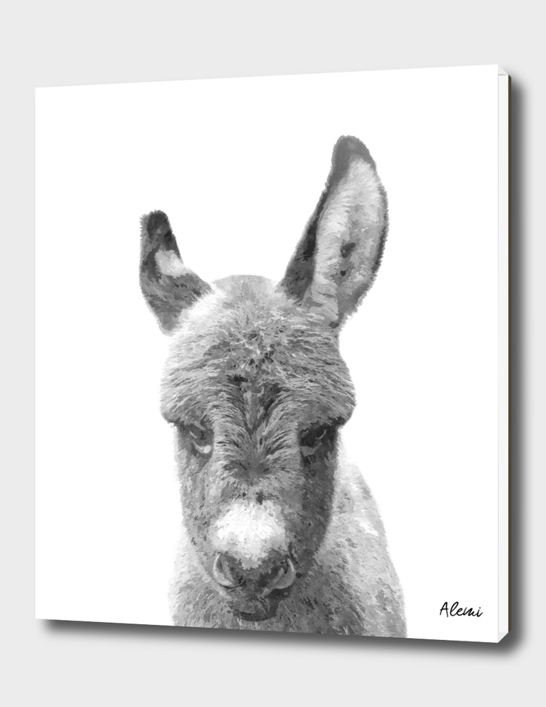 Black and White Baby Donkey