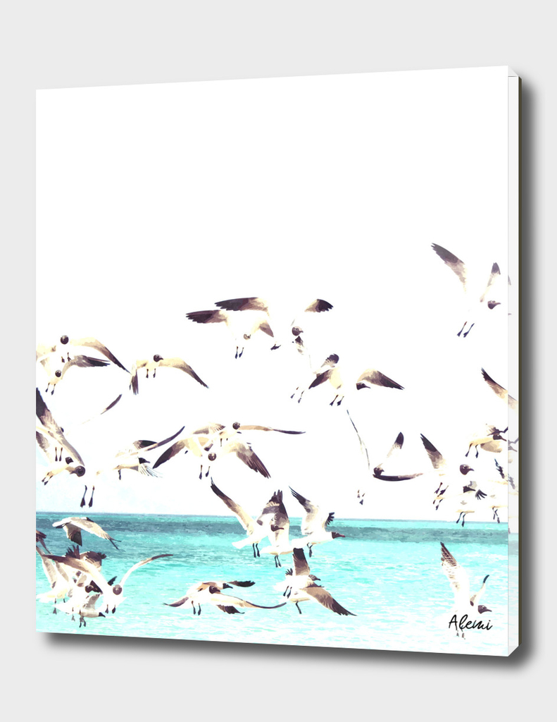 Seagulls Illustration