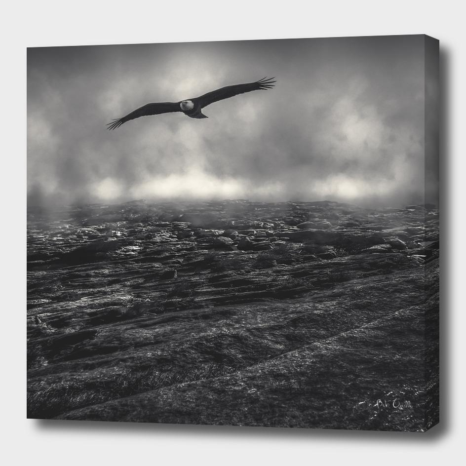 Hunting The Fog Line Bald Eagle