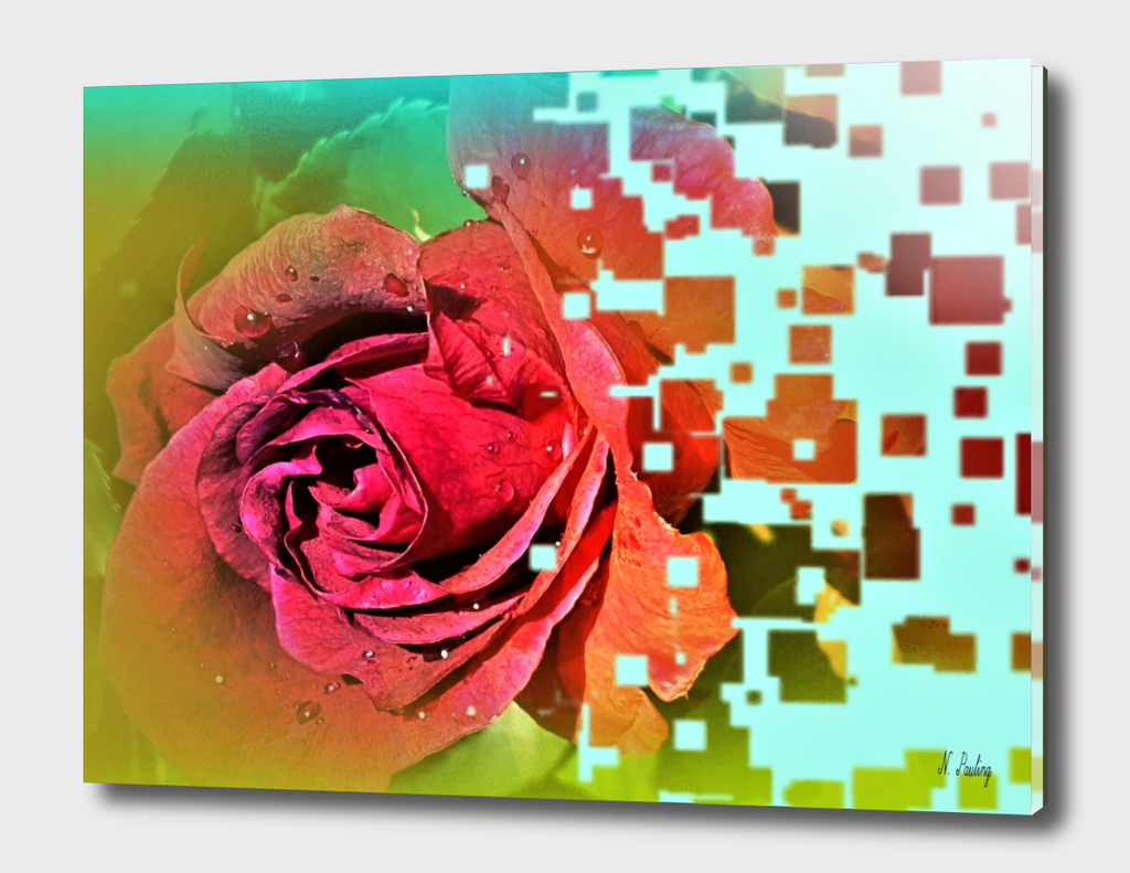 Altered Red Rose
