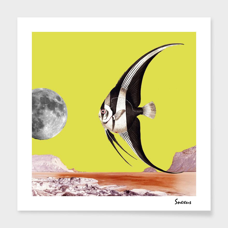 plenty of fish in the sea yellow