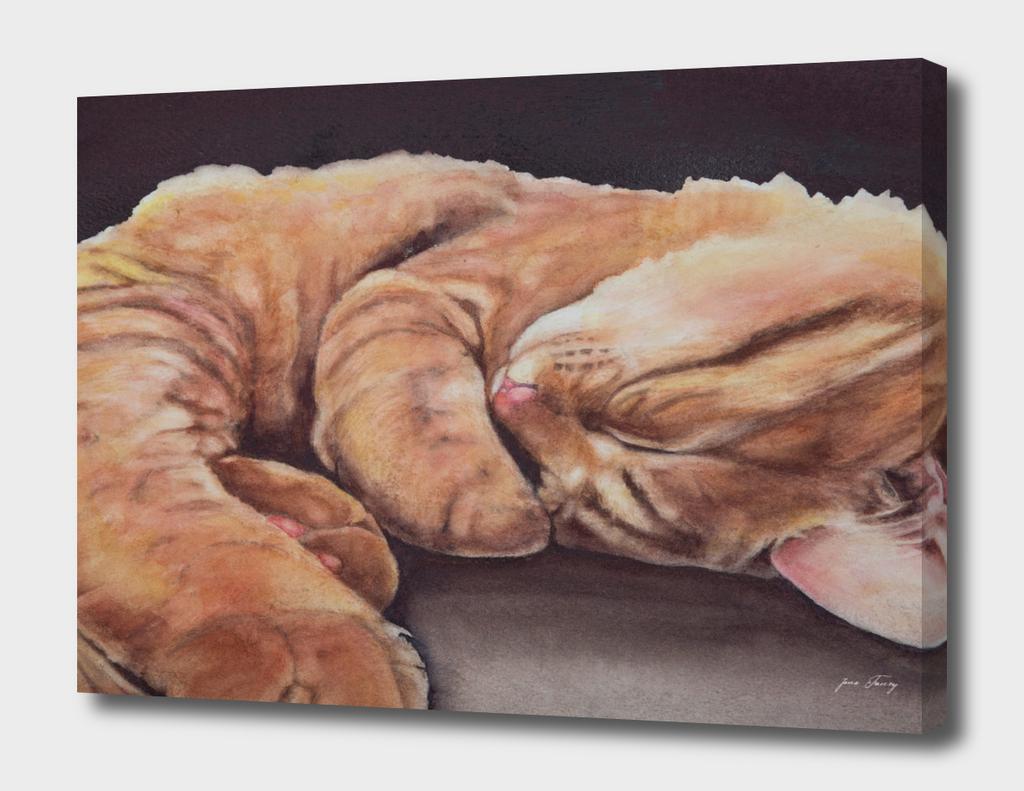 Allegory of a Kitten's Life Dreamweaver No.12