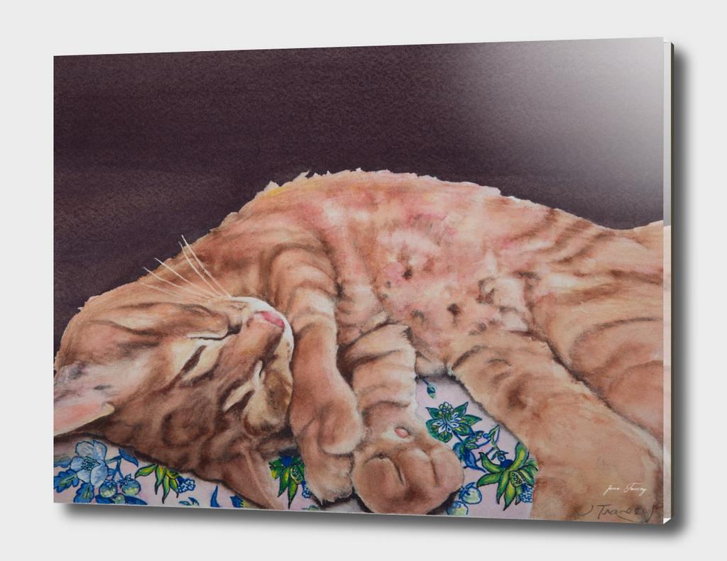 Allegory of a Kitten's Life / Dreamweaver No.9