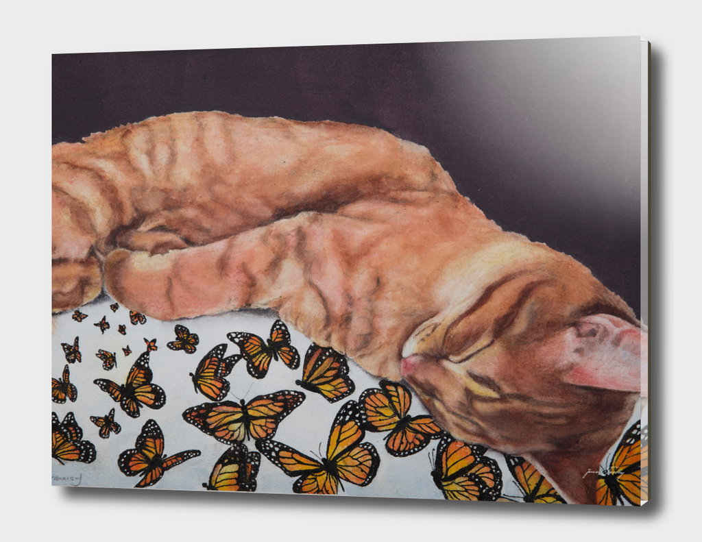 Allegory of a Kitten's Life / Dreamweaver No.8