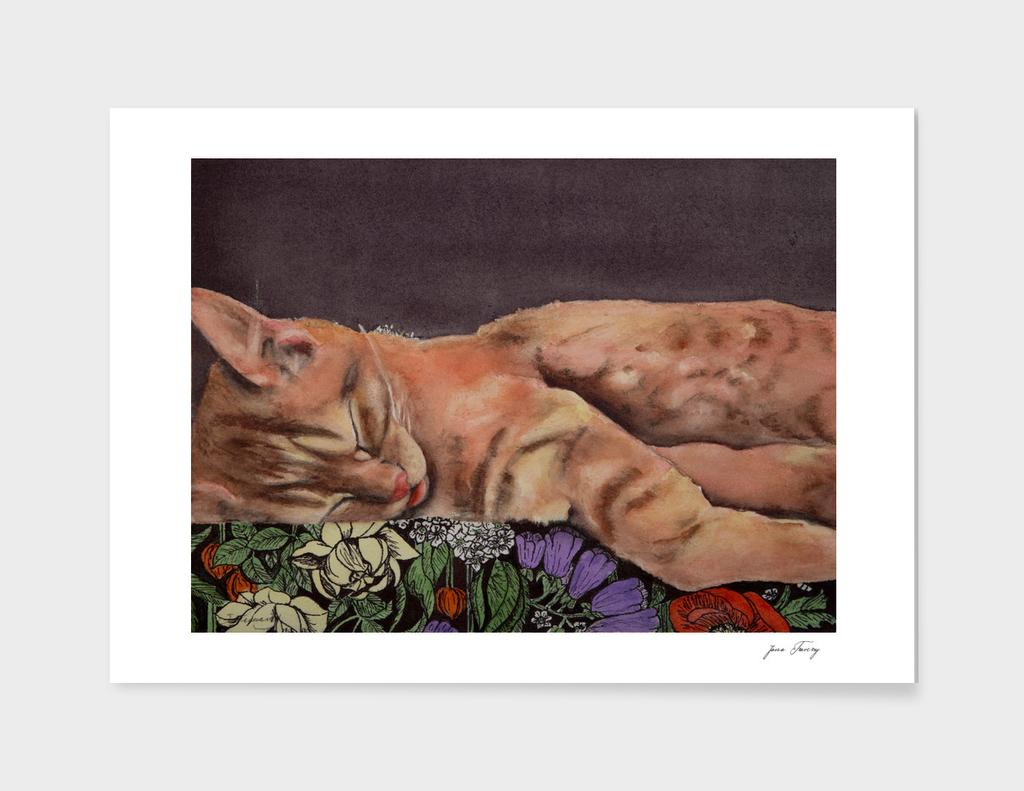 Allegory of a Kitten's Life / Dreamweaver No.1