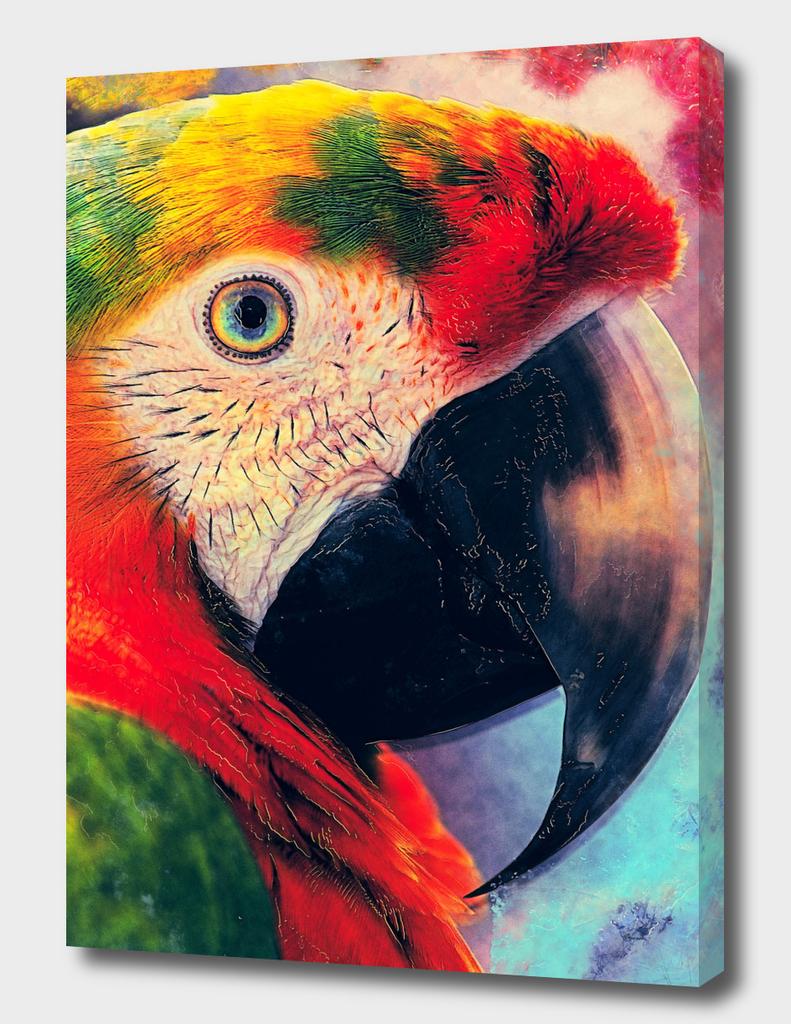 parrot ara #ara #parrot #animals