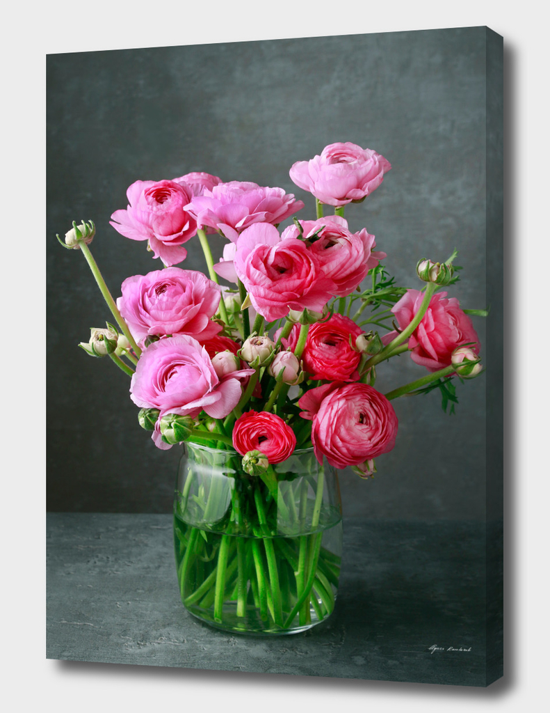 Bouquet of pink ranunculs flowers