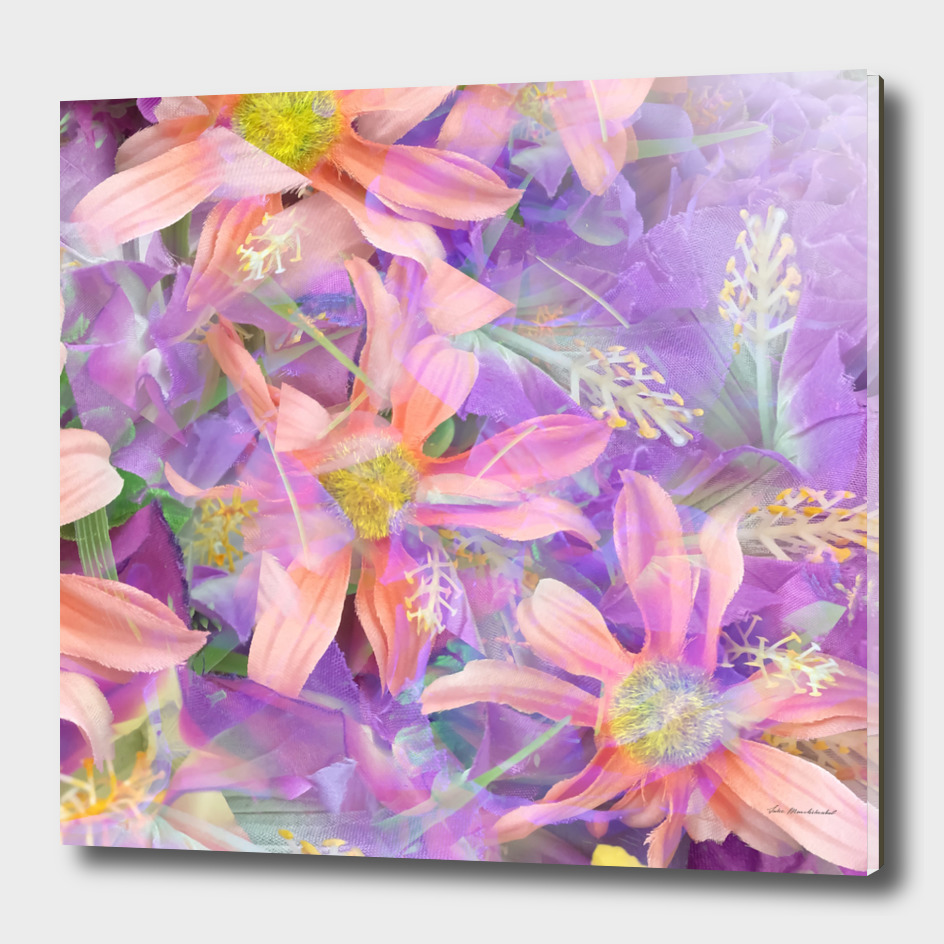 blooming pink daisy flower with purple flower background