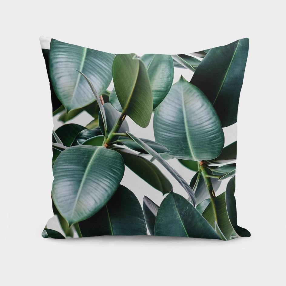 Tropical Elastica