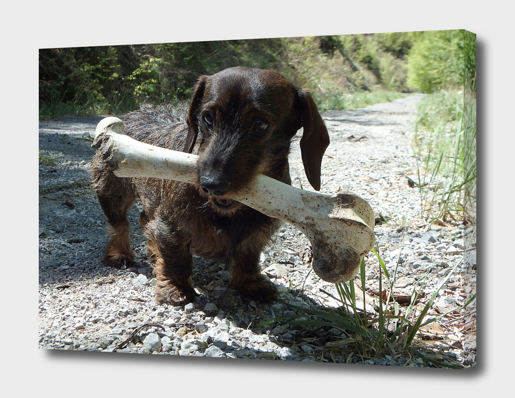 Small dog and a large bone