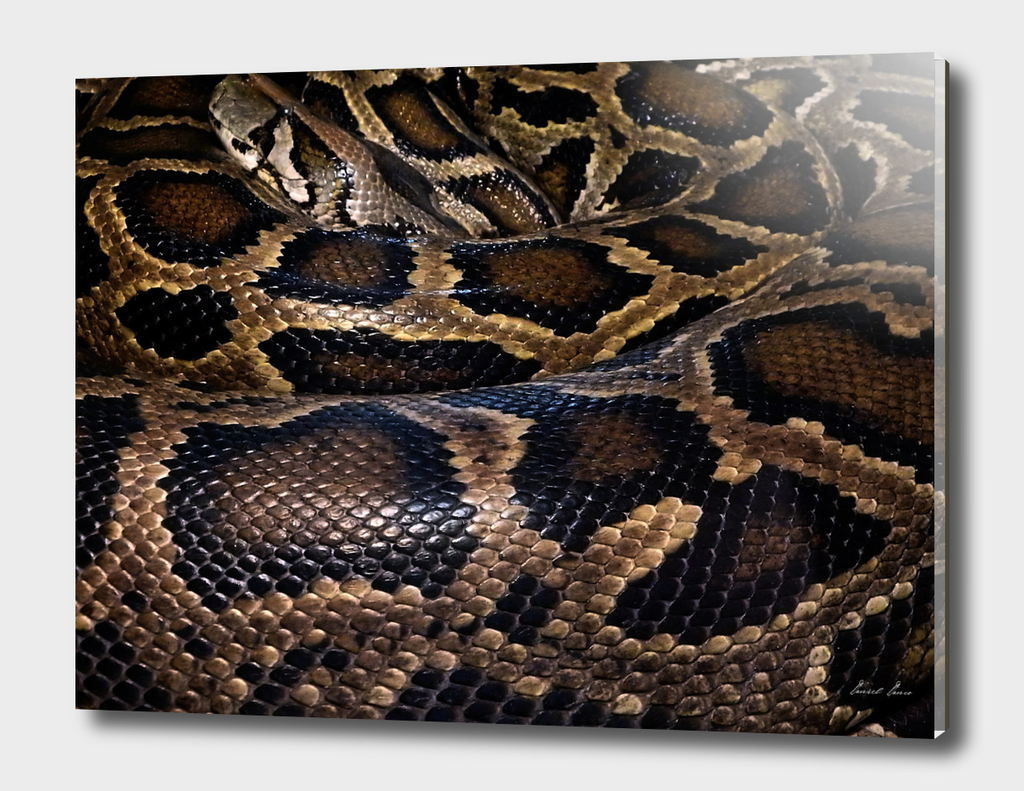 Python - leather - background