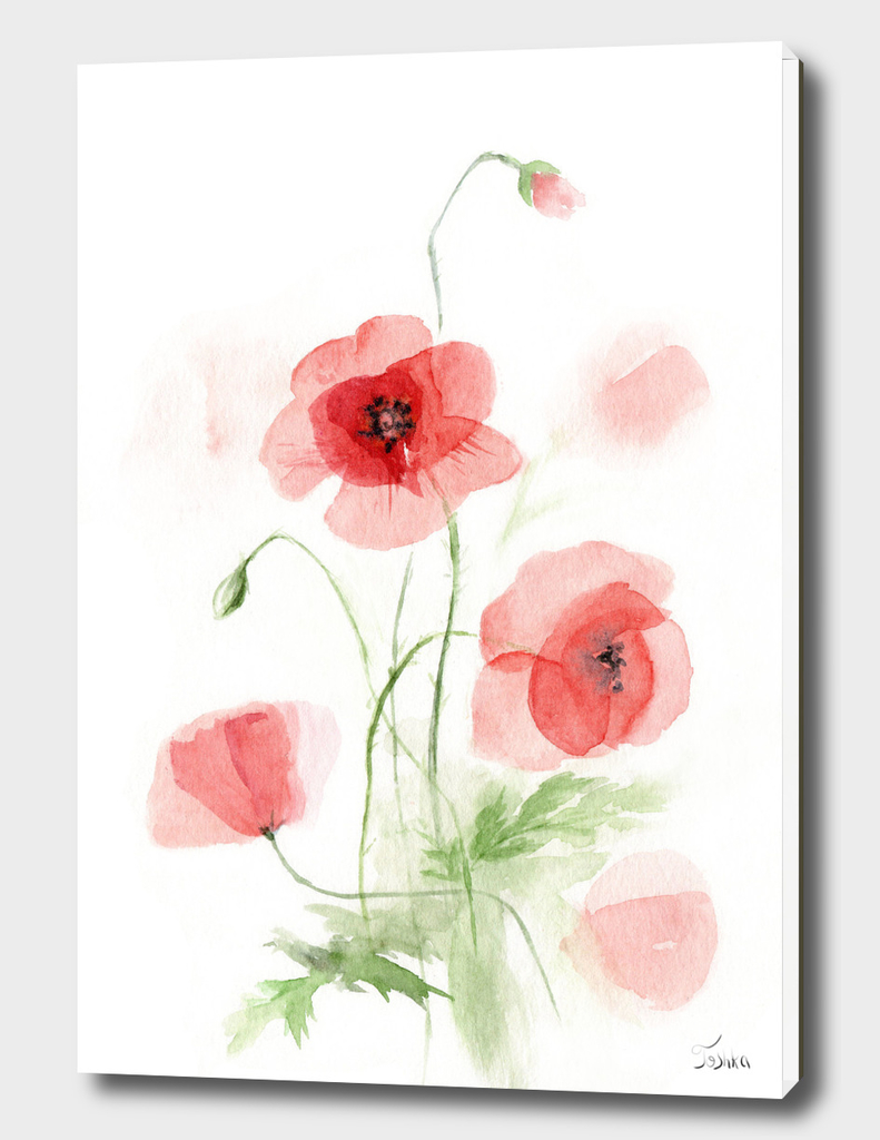 transparent poppies