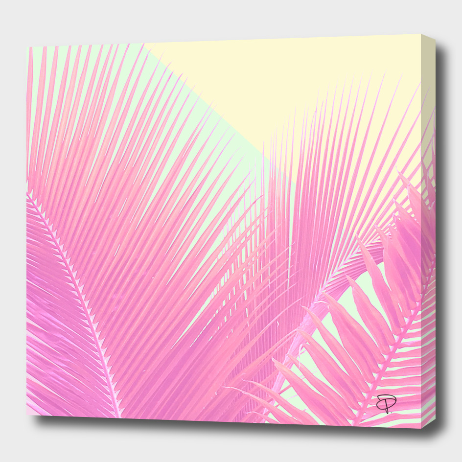 Pastel Blush Palm