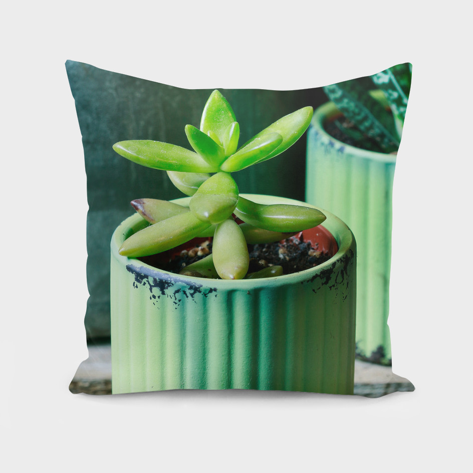 Succulent plant in green pot.