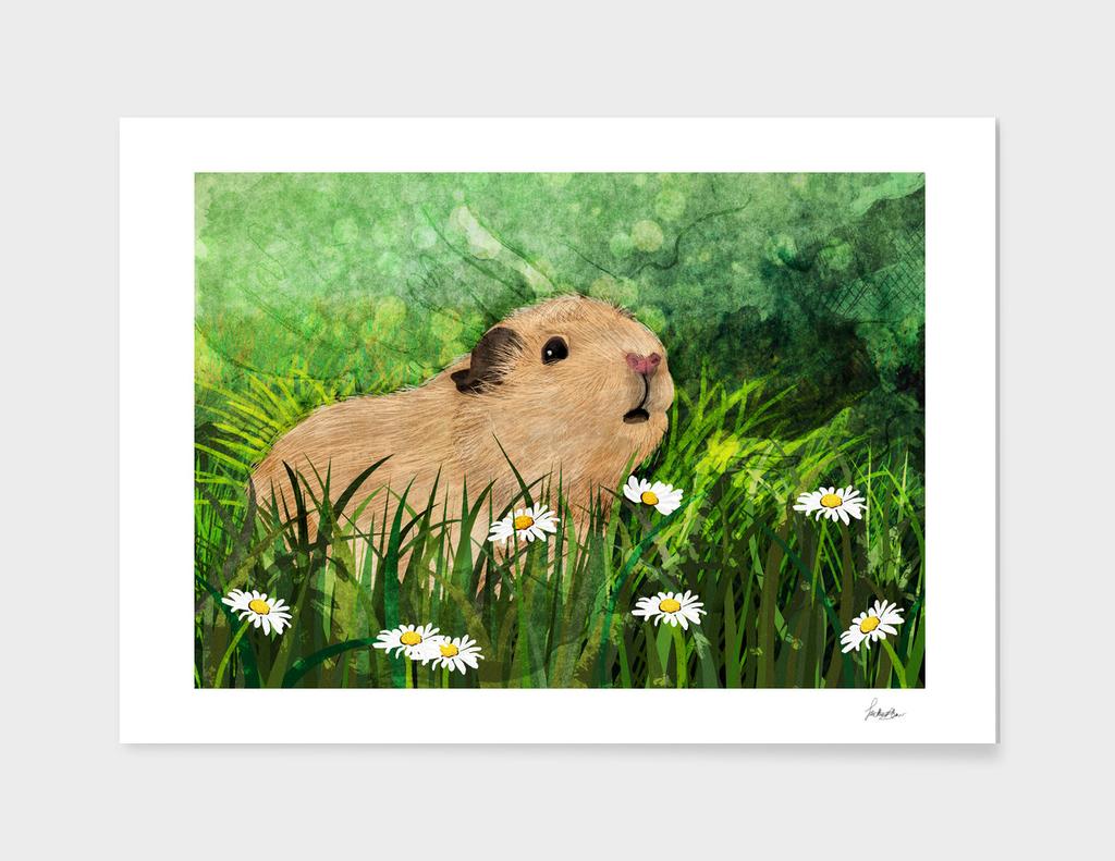 Little Guinea Pig