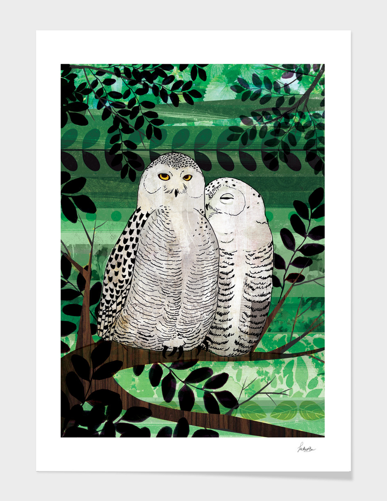 feathered love