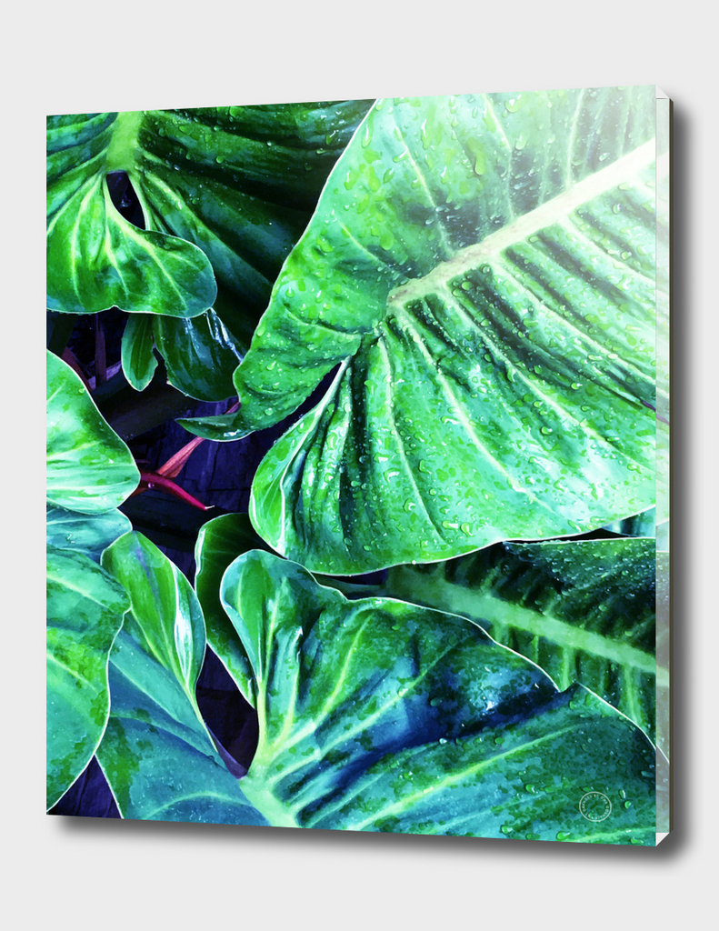 Another Botanical