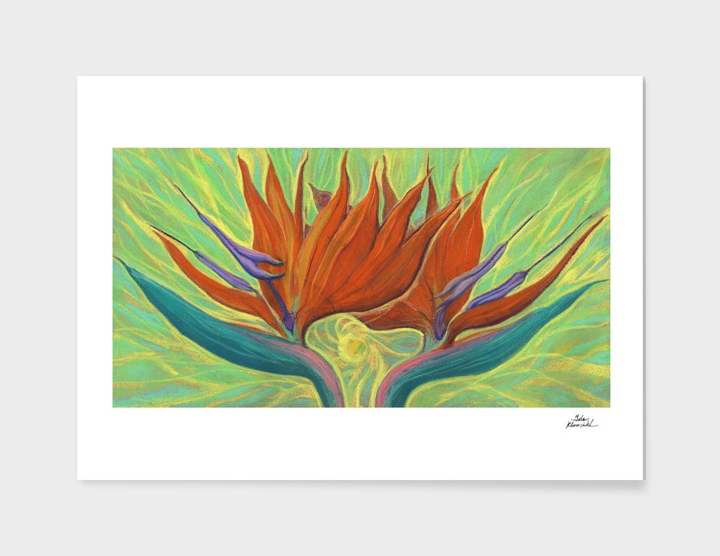 Strelicia / Bird of Paradise