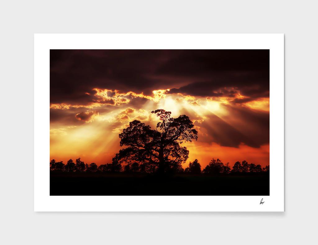 Lake District Tree Sunset