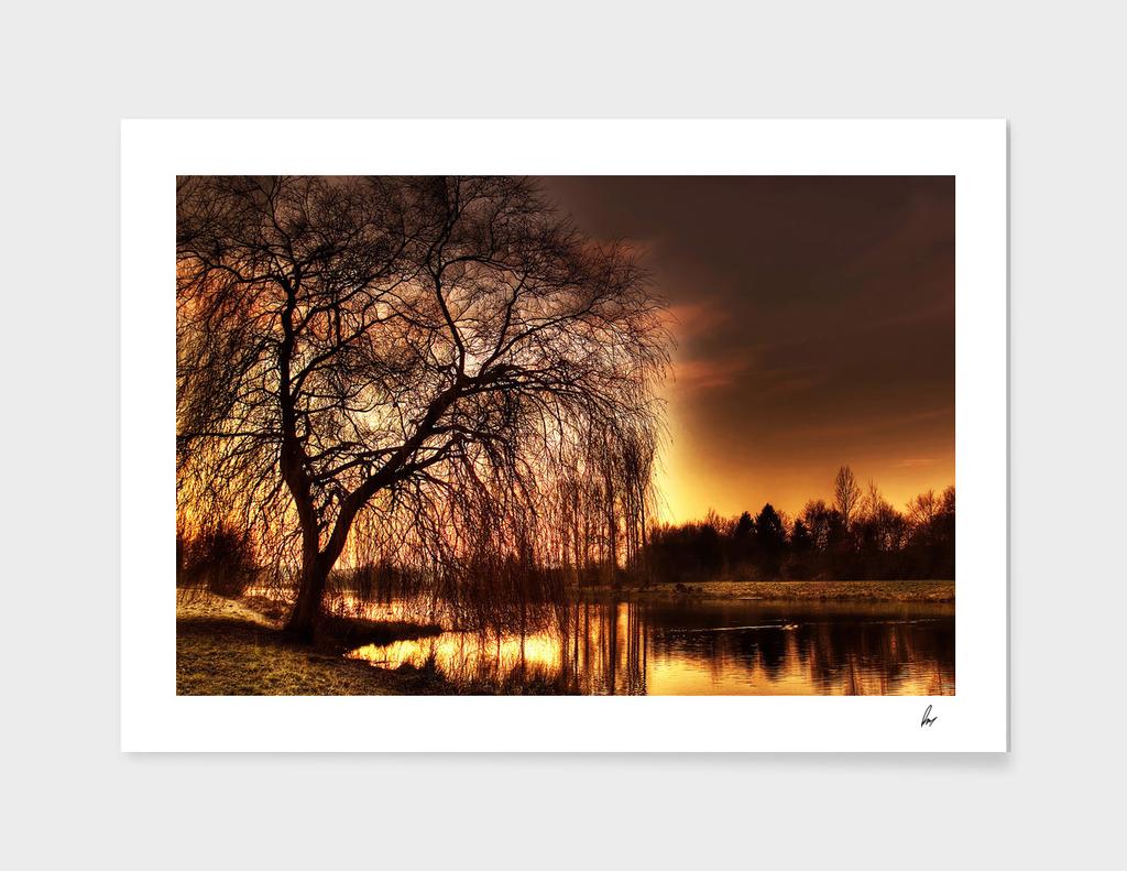 Willow Tree Golden Dusk
