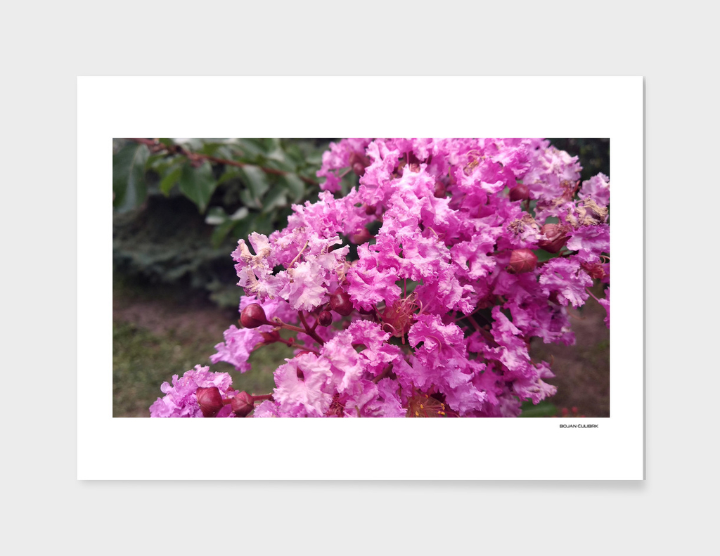 Flora (4)