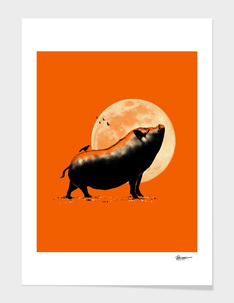 barking pig