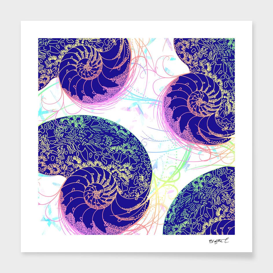 Flamboyant Colorful Sea Shells Illustration