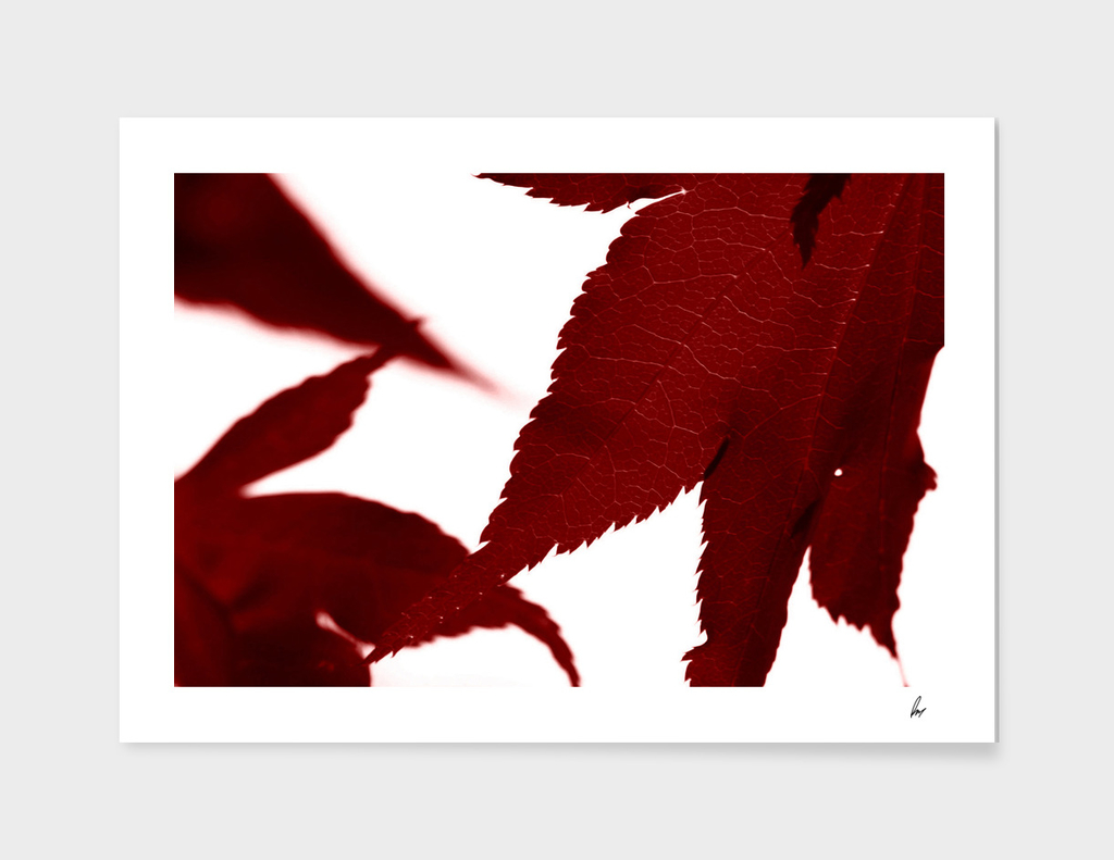 Deep Red Leaves Close Up