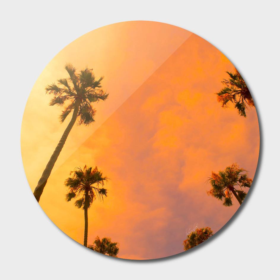Candy Palms