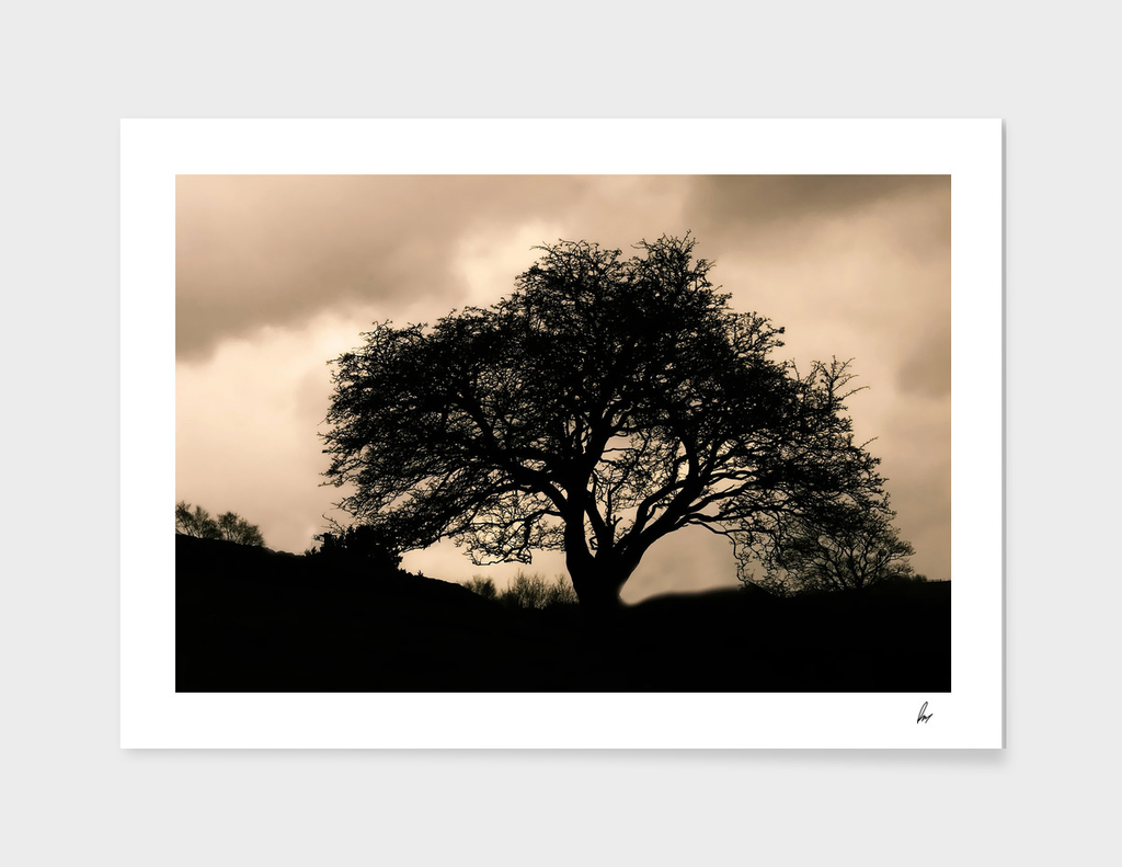 English Oak Tree Sepia