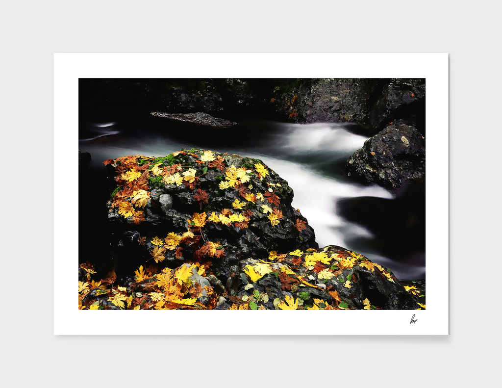 Yellow Autumn Leaves River