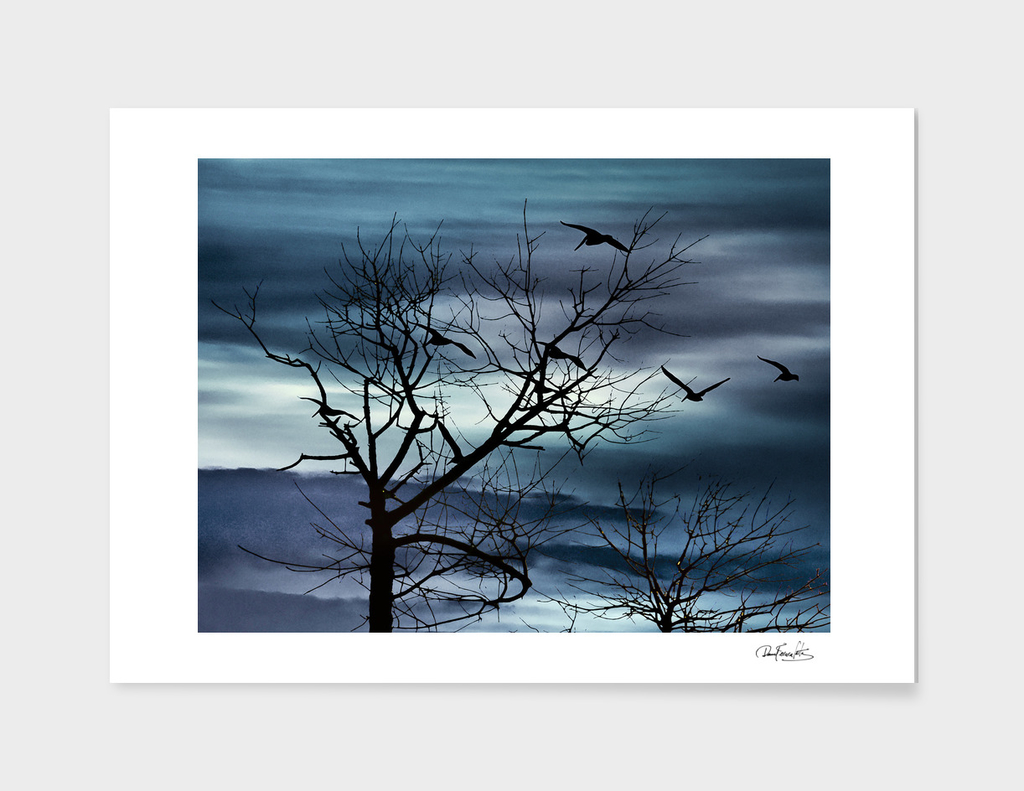 Night Nature Scene Photo Illustration