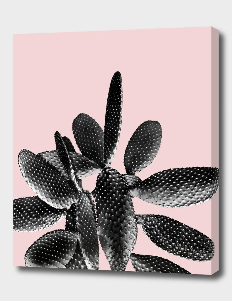 Black Blush Cactus #1