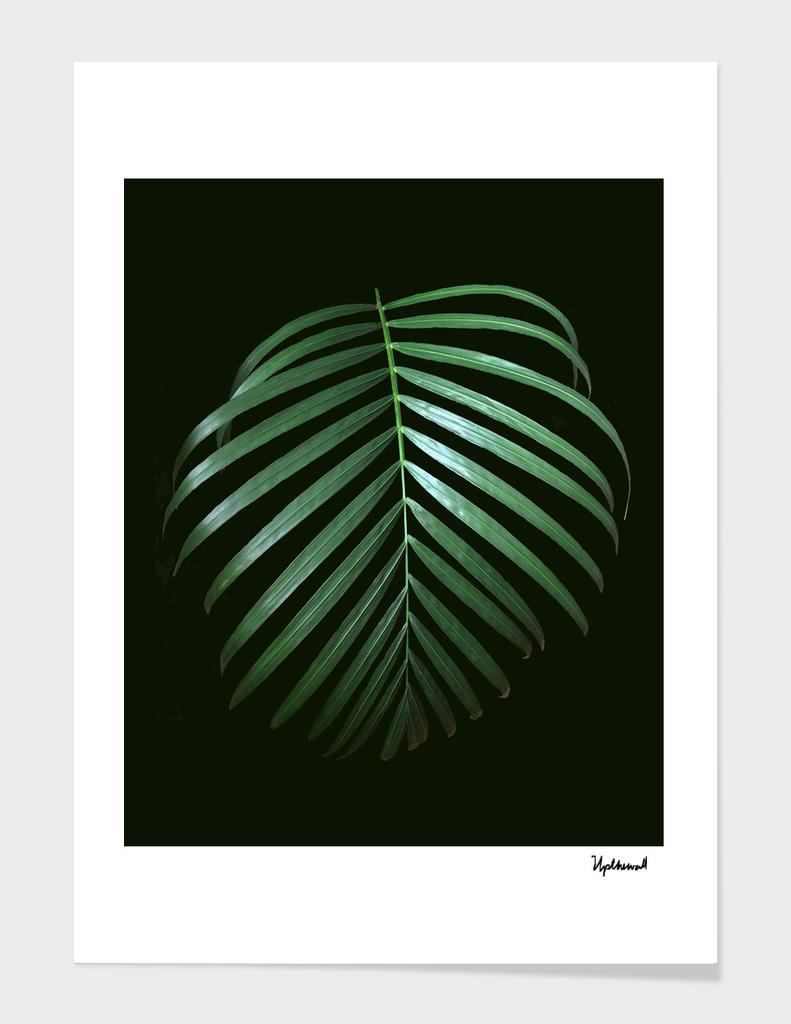 Simply Green (dark)