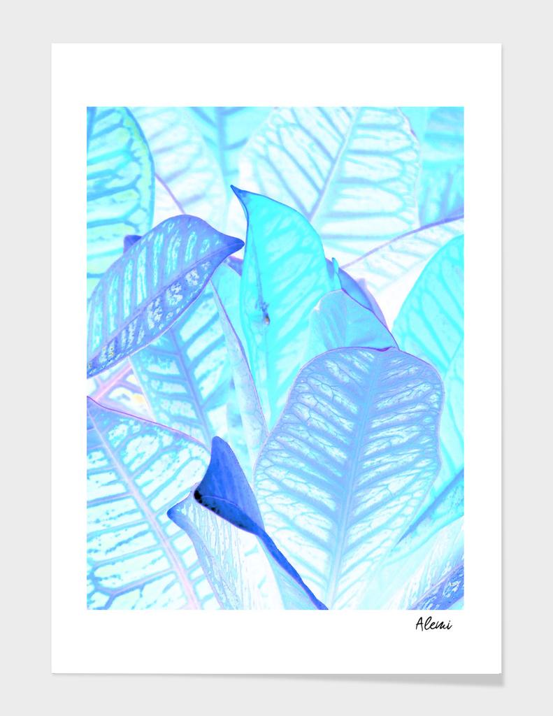 Blue Croton Tropical Leaves