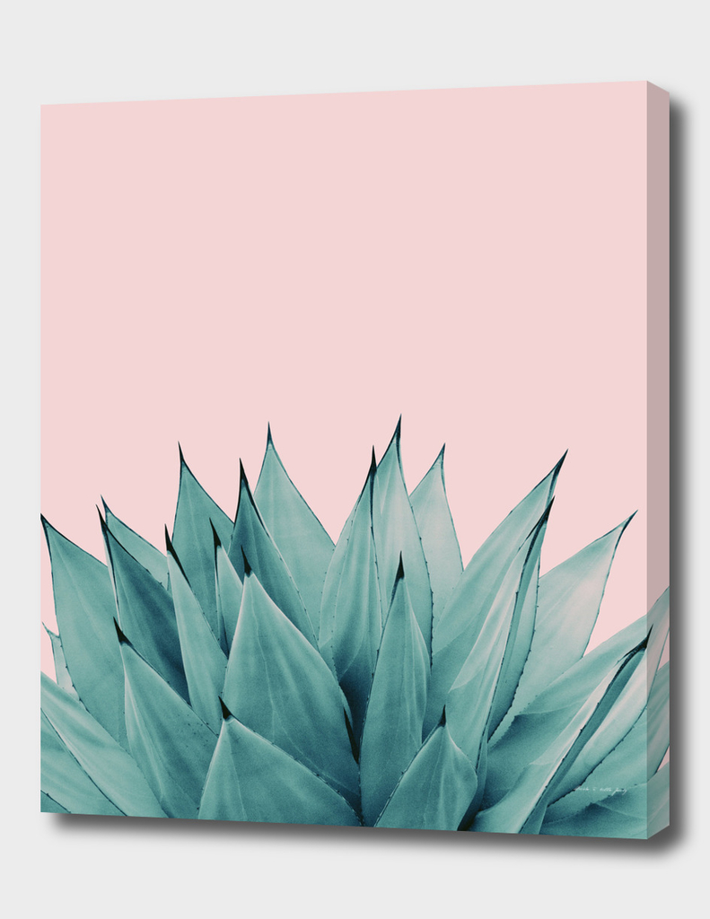 Agave Vibes #5