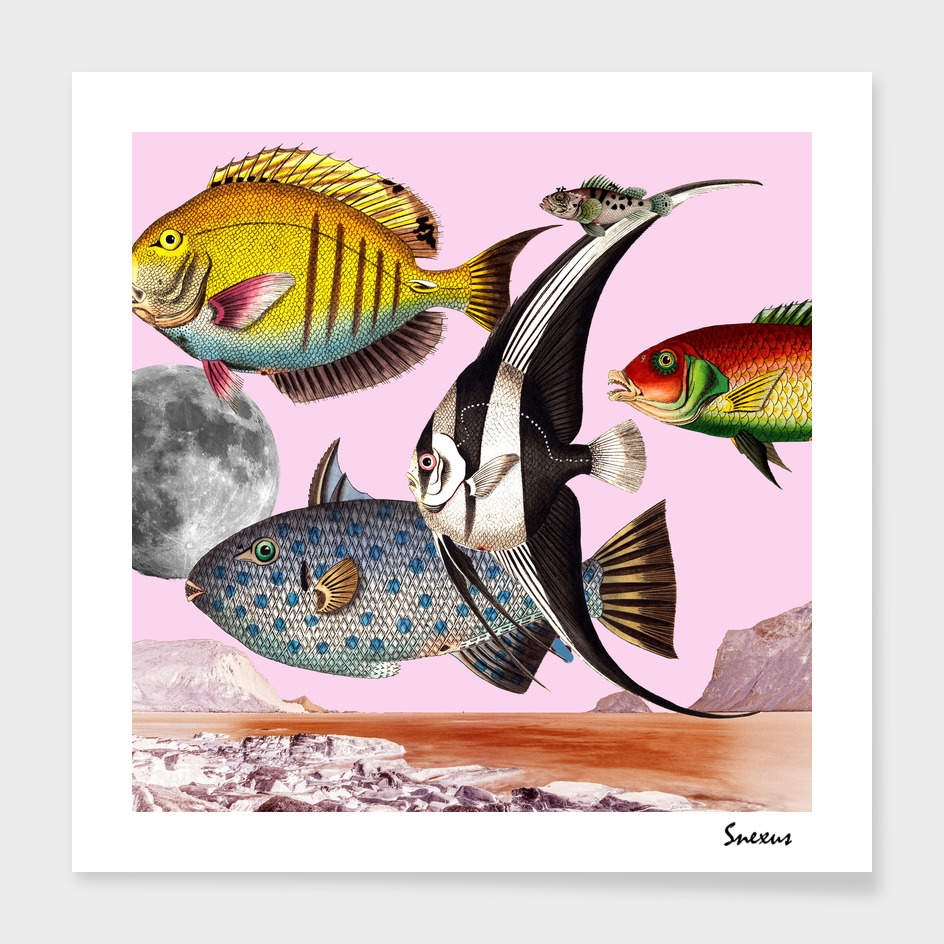 Fish World Pink #collage