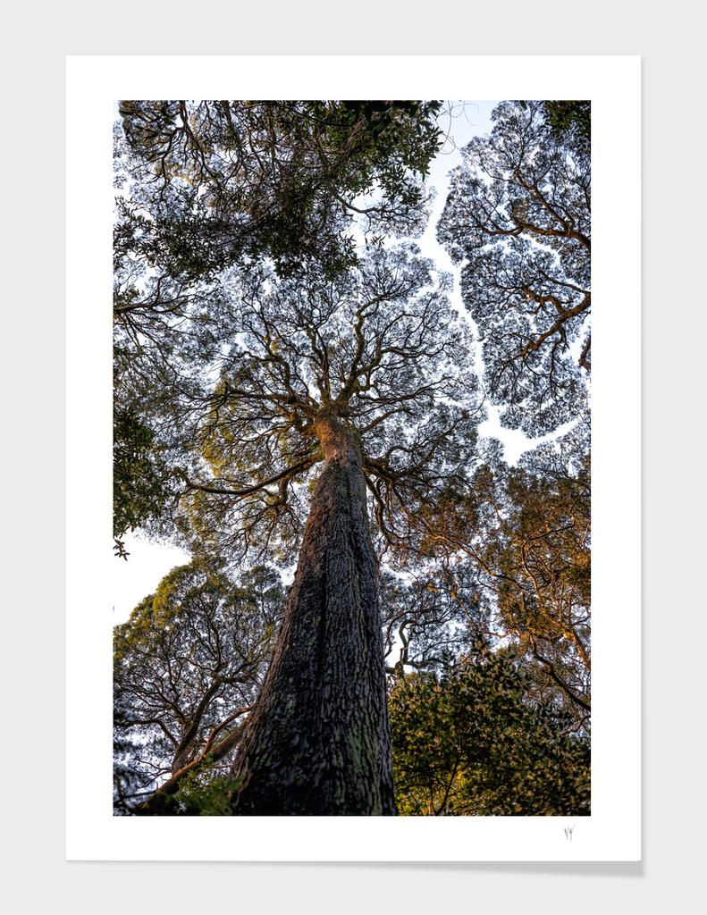 Blackwood Fractals