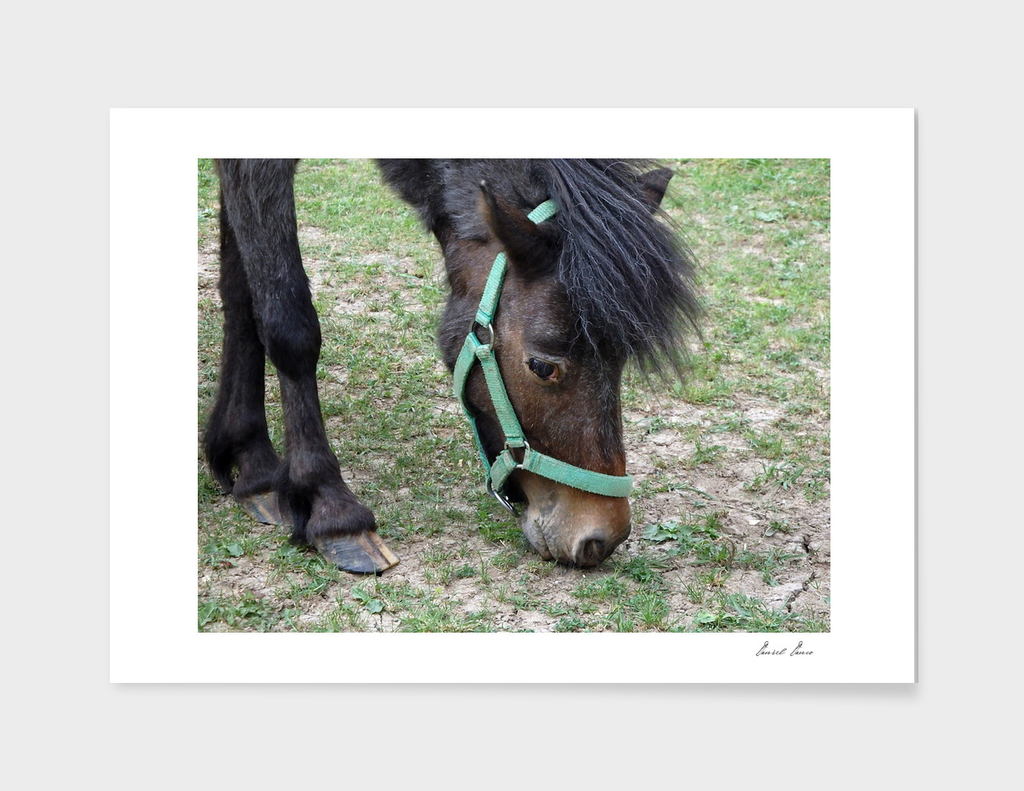 Pony on green meadow