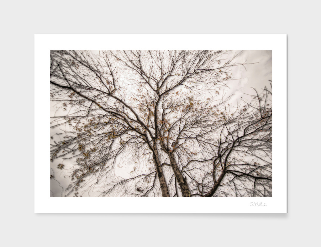 A dark tree in a silver forest 3