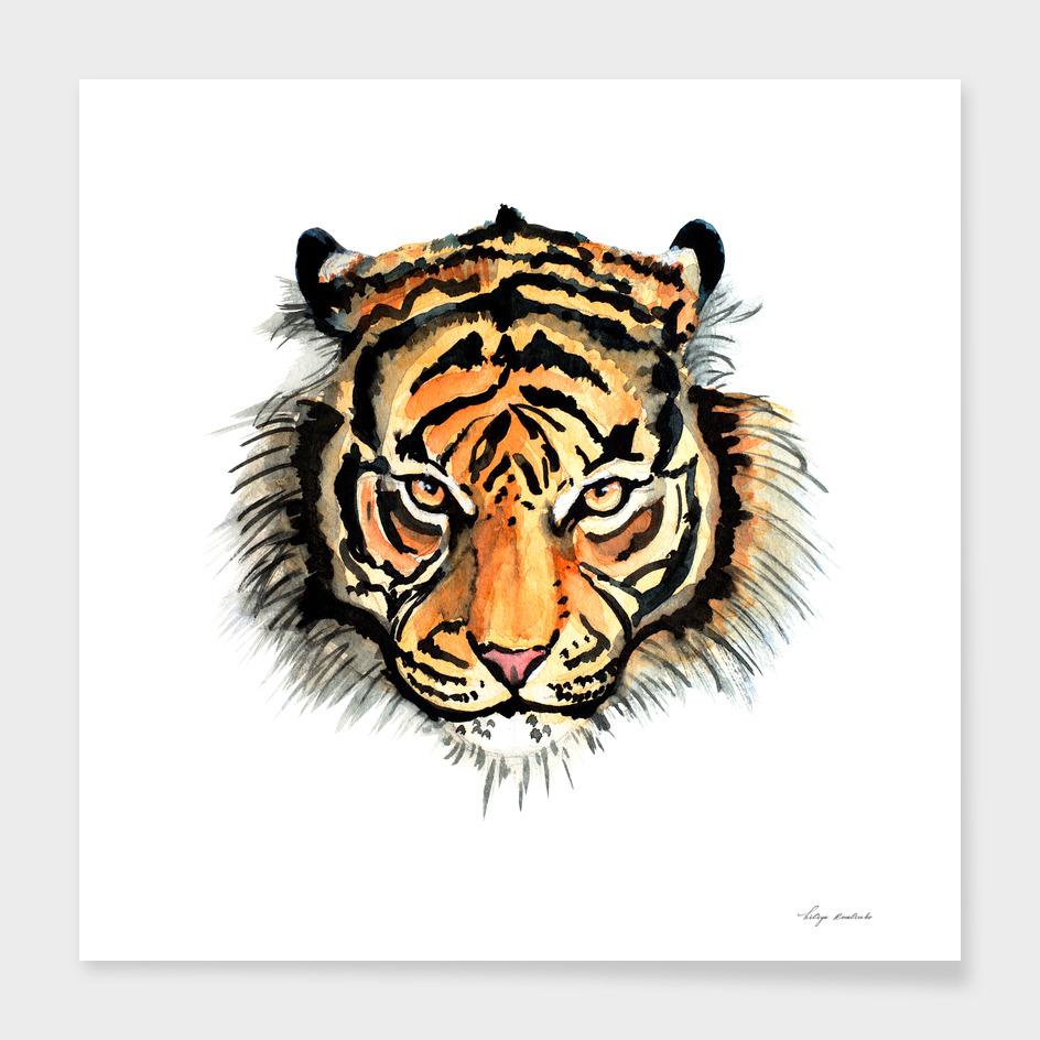 tiger watercolor