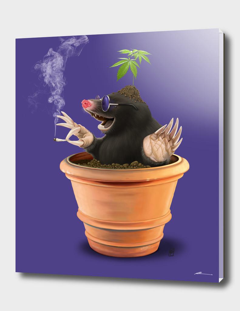 Pot (colour)