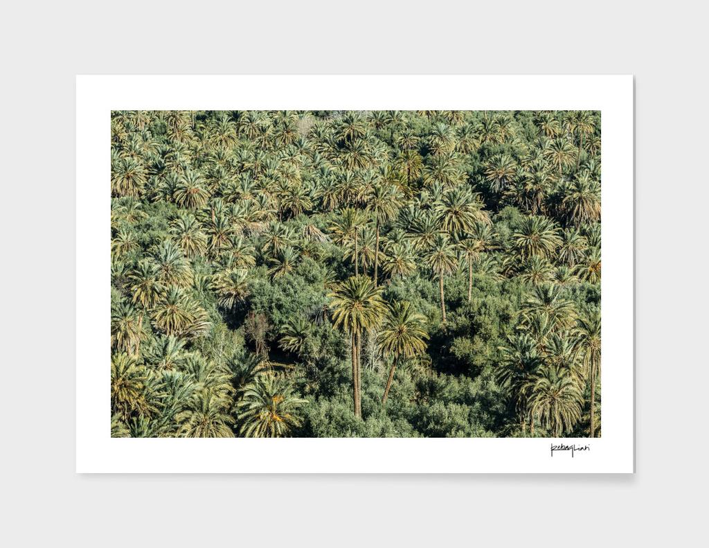 Jungle in Morocco