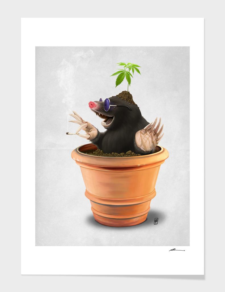Pot (wordless)